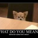 Disgruntled Dog