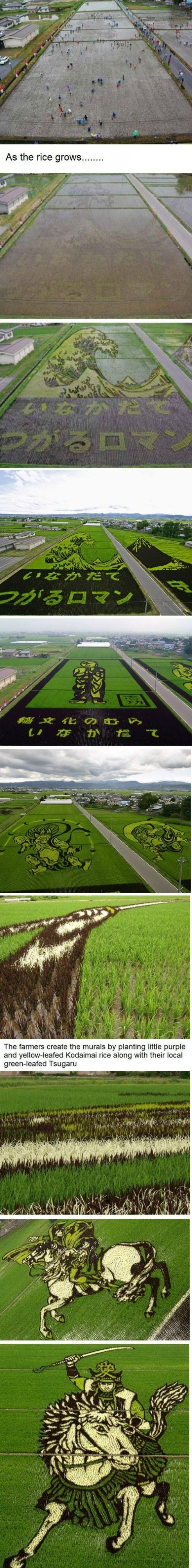 Awesome Rice Field Art!