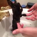 Bunny Bathtime