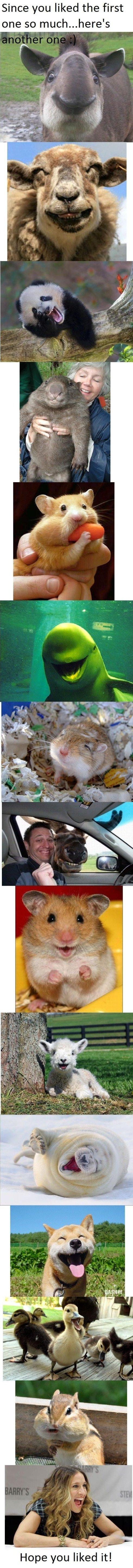 Happy Animals!