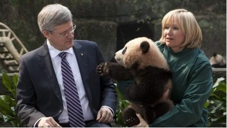 Hello, I'm a Panda