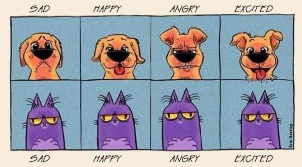Dog vs. Cat – Emotions