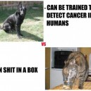Dogs vs.Cats