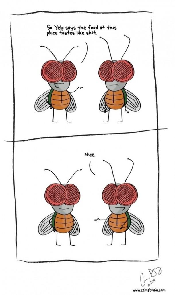 Flies Talking