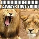 Lion Tries to Be Whitney Houston