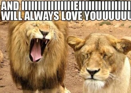 Lion Tries to Be Whitney Houston