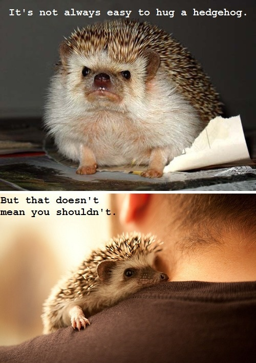 Cute Hugging Hedgehog