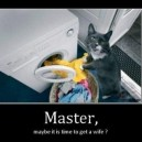 Listen To The Cat