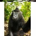 Monkeys Self Portrait