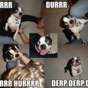 Derp the Dog