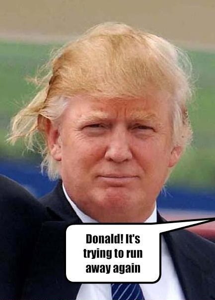 Donald Trumps Hairstyle