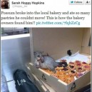Possum in Bakery