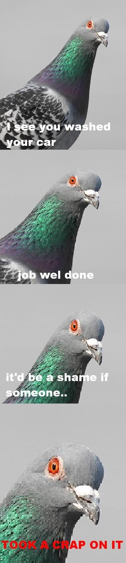 Scumbag Pigeons