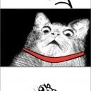 Cats Biggest Fear