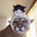 Cute Small Cat and Big Cat =)