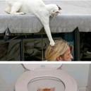 Cats – Ambush Experts