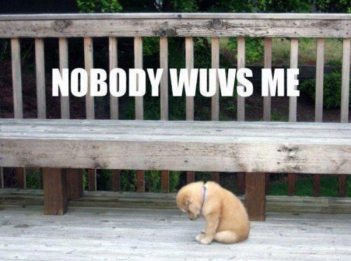 Naaawww Little Puppy