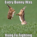 Fighting Bunny