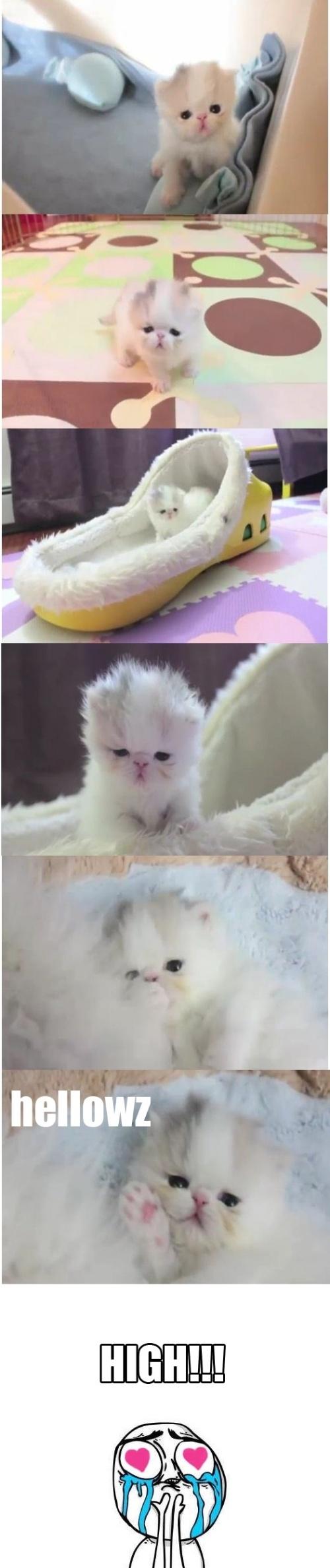 Cuteness lvl. 1000!