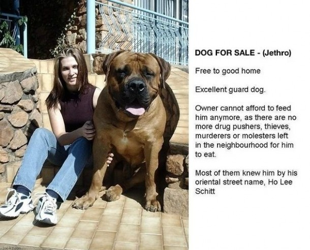 Epic Dog Sale