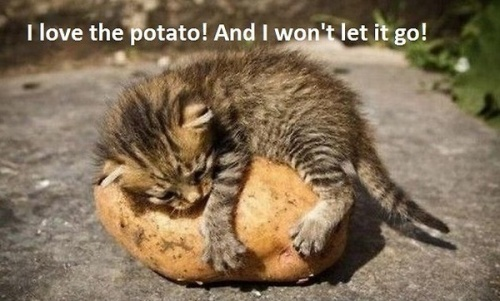 I Love The Potato!