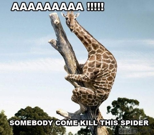 Kill The Spider!
