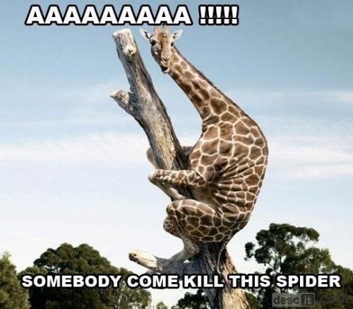 Kill The Spider!