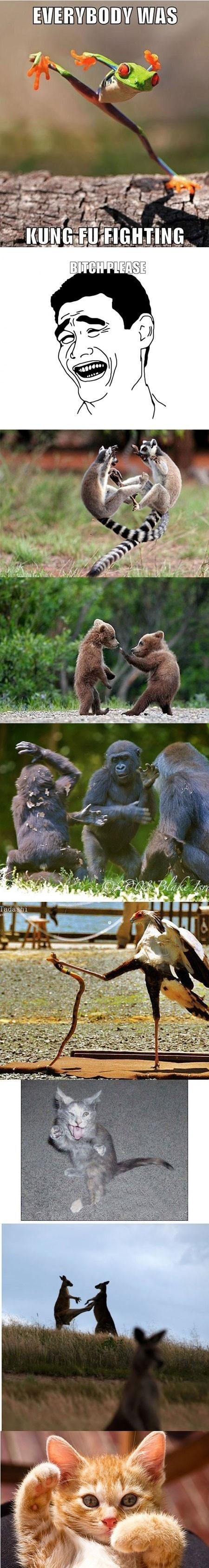 Everybodey Was Kung Fu Fighting