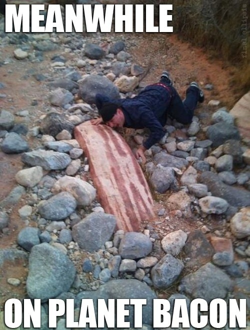 Meanwhile On Planet Bacon