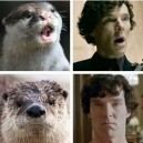 Otters Look Like Sherlock Holmes