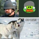 Pepper Spray Cop vs. Angry Birds