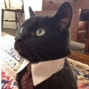 Cats – Like a Sir
