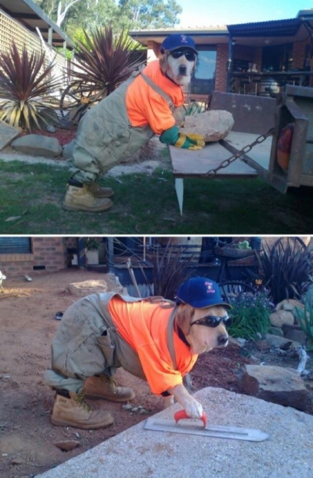 Working Like a Dog