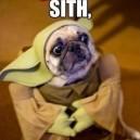 Dog Yoda