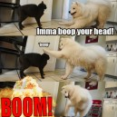 Imma Boop Your Head!