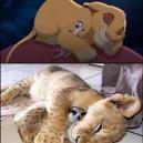 Simba and Timon for real