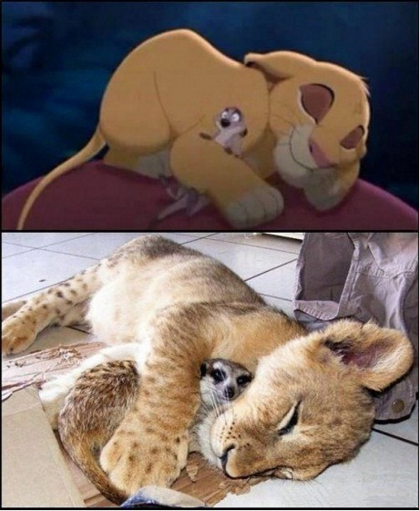 Simba and Timon for real