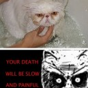 Angry Kitty Is Angry