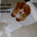 Dog The Bounty Hunder