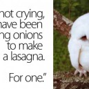 I'm Not Crying – Owl