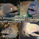Joking Eels