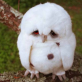 Sad Owl is Sad