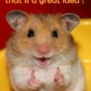 Always Listen To The Hamster