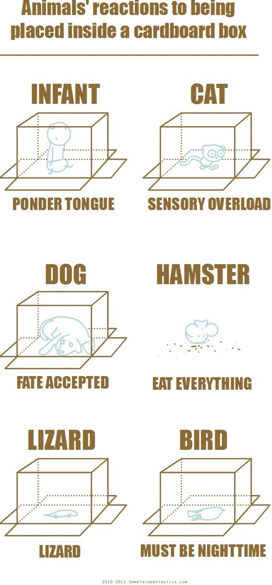 Animals in a Box