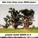 Awesome Baobab Tree