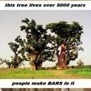 Awesome Baobab Tree