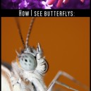 How I See Butterflies