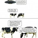 Cows See Everything