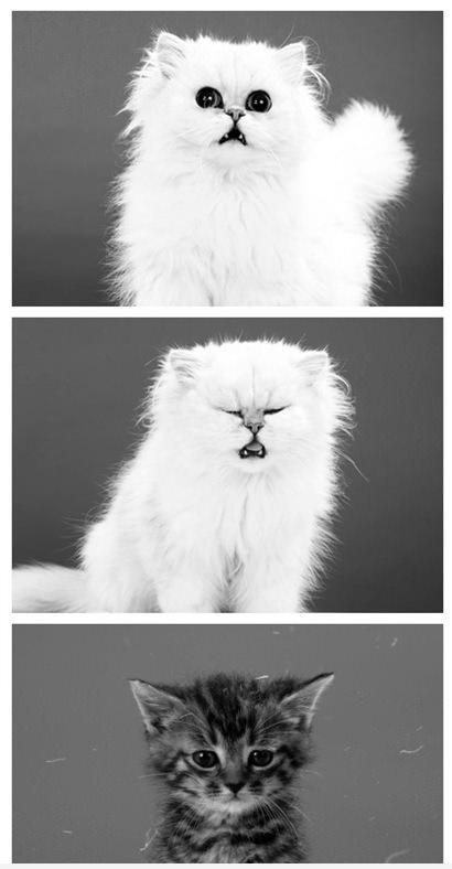 Cute Sneeze