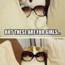 Fabulous Kitten